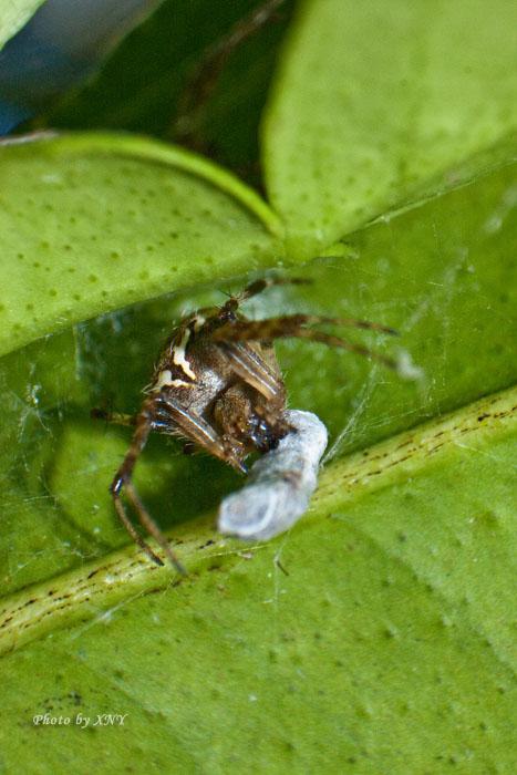bagian ketiga macro laba laba kecil dengan teknik lensa