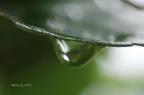 Embun di daun, FL 45mm
