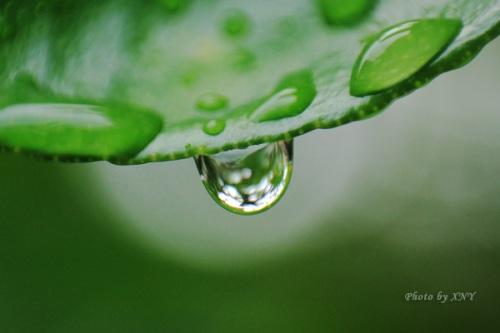Embun di daun, FL 50mm