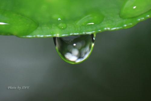Embun di daun, FL 43mm