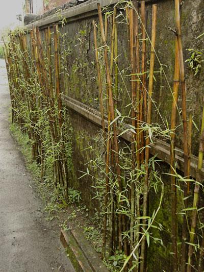 01_bambu_pagar